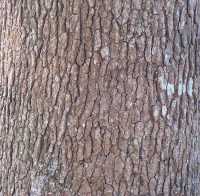 bark1