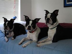 3 doggies